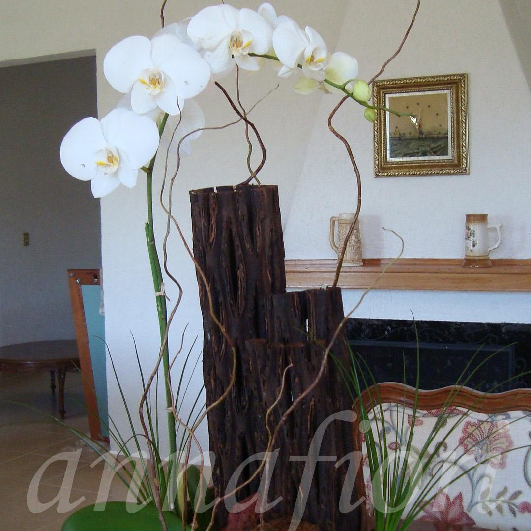 Flores A Domicilio Orquídeas Blancas
