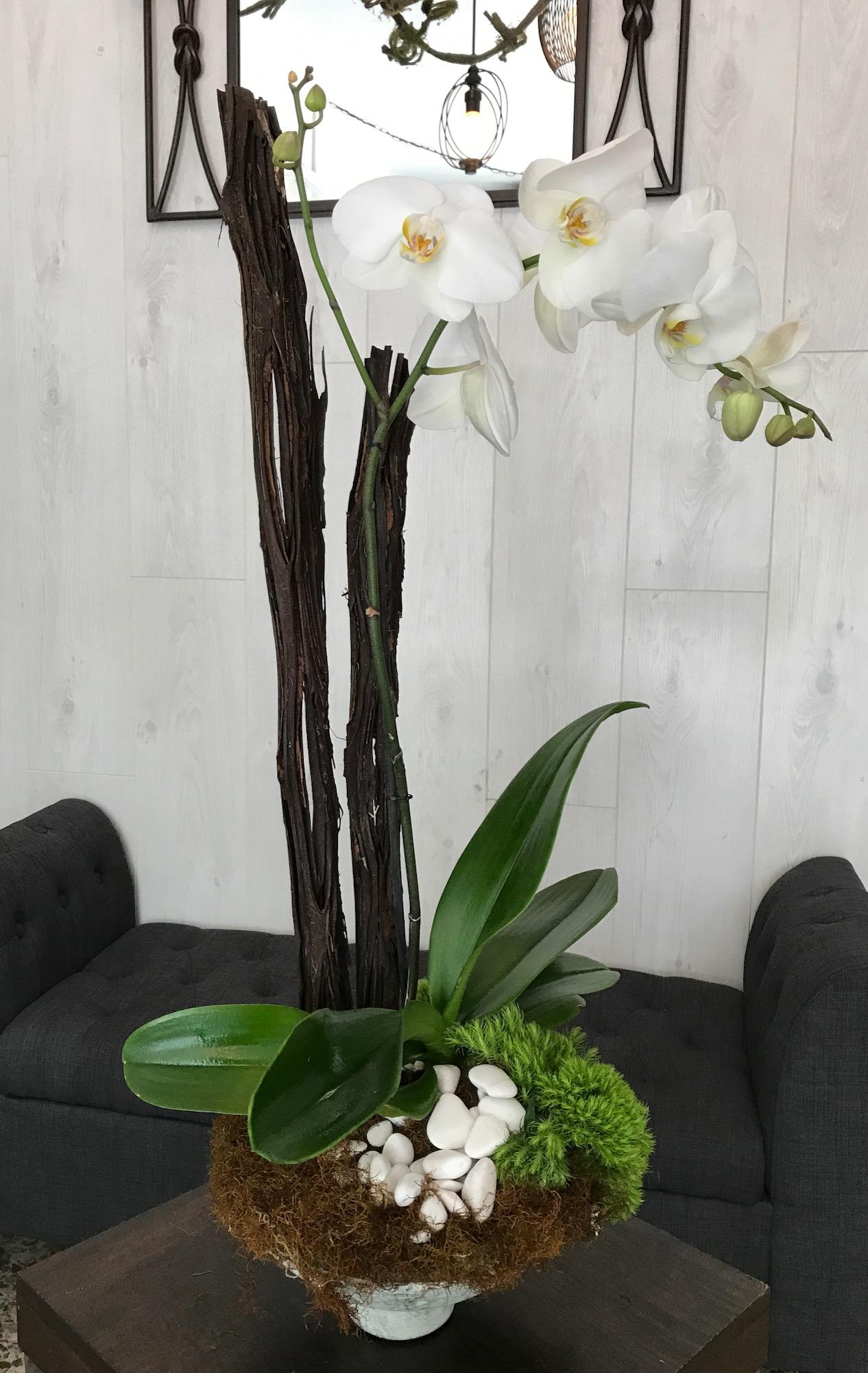 Orquídeas Class